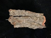 Pine Bark Mounts - medium